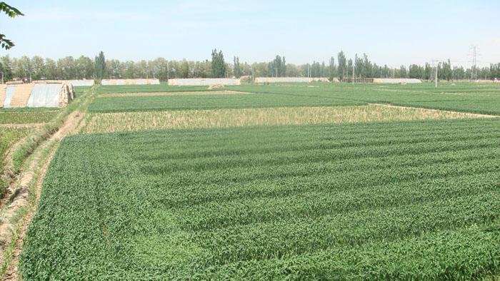 农业开发公司蔬菜园